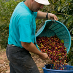 fairtrade coffee farmer