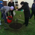 First tree to be planted - a Thorle Pippin - a Scottish variety dating back to 1831.