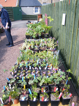 Rare Plants for Rare Diseases Sale - Sunday 6 May 2012
