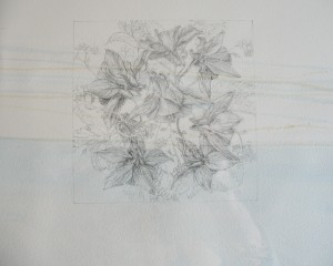 'Wild Flower' graphite on raw pigments 2011 (section)