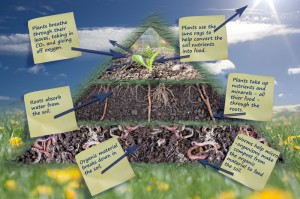 Growth pyramid - leaves, roots & worms
